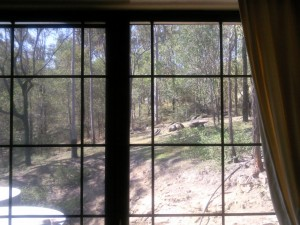View from 1 of my 2 uncovered 6ft x 4ft windows looking out to our rather dry block of land